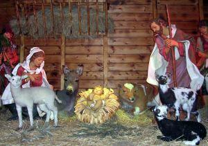 686077_nativity